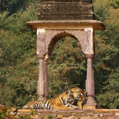 2 Days Jaipur Ranthambore Tour