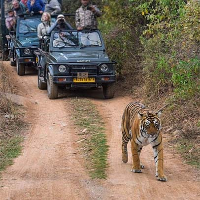 3 Days Ranthambore Tour from Delhi