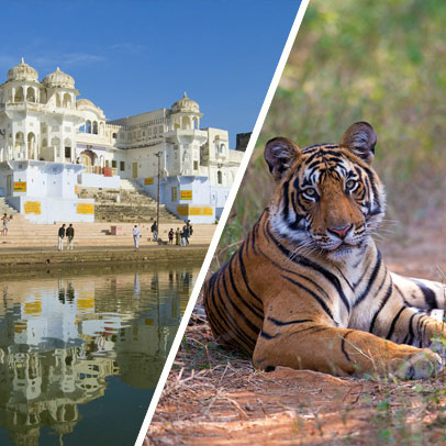 5 Days Jaipur Pushkar Ranthambore