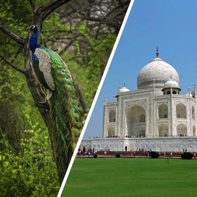 4 Days Jaipur Bharatpur Agra Tour