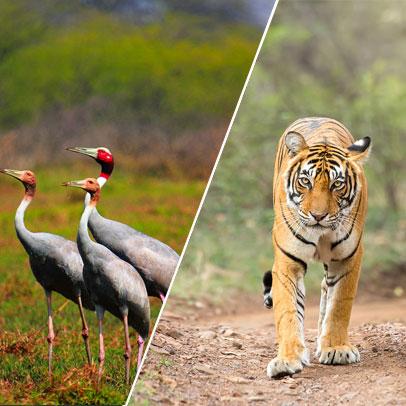 12 Days Delhi Ranthambore Bharatpur Agra Fatehpur Sikri Bandhavgarh Kanha Nagpur Tour