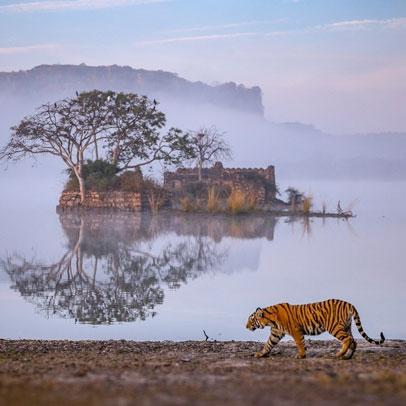 4 Days Agra Ranthambore Jaipur Tour