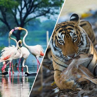 6 Days Agra Bharatpur Ranthambore Jaipur Tour