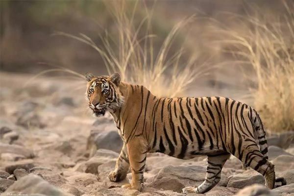 Best Wildlife Sanctuaries Around Jaipur